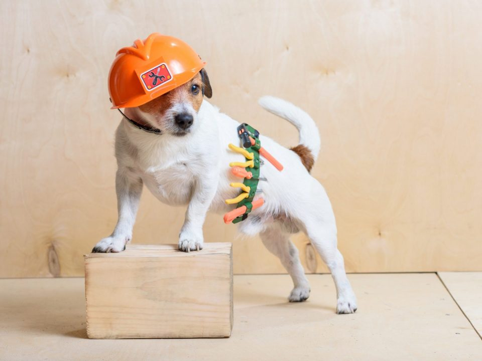 Dog in a construction hat
