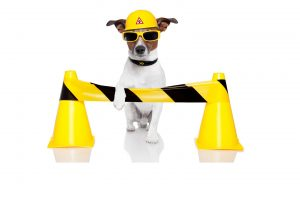 dog with safety cones